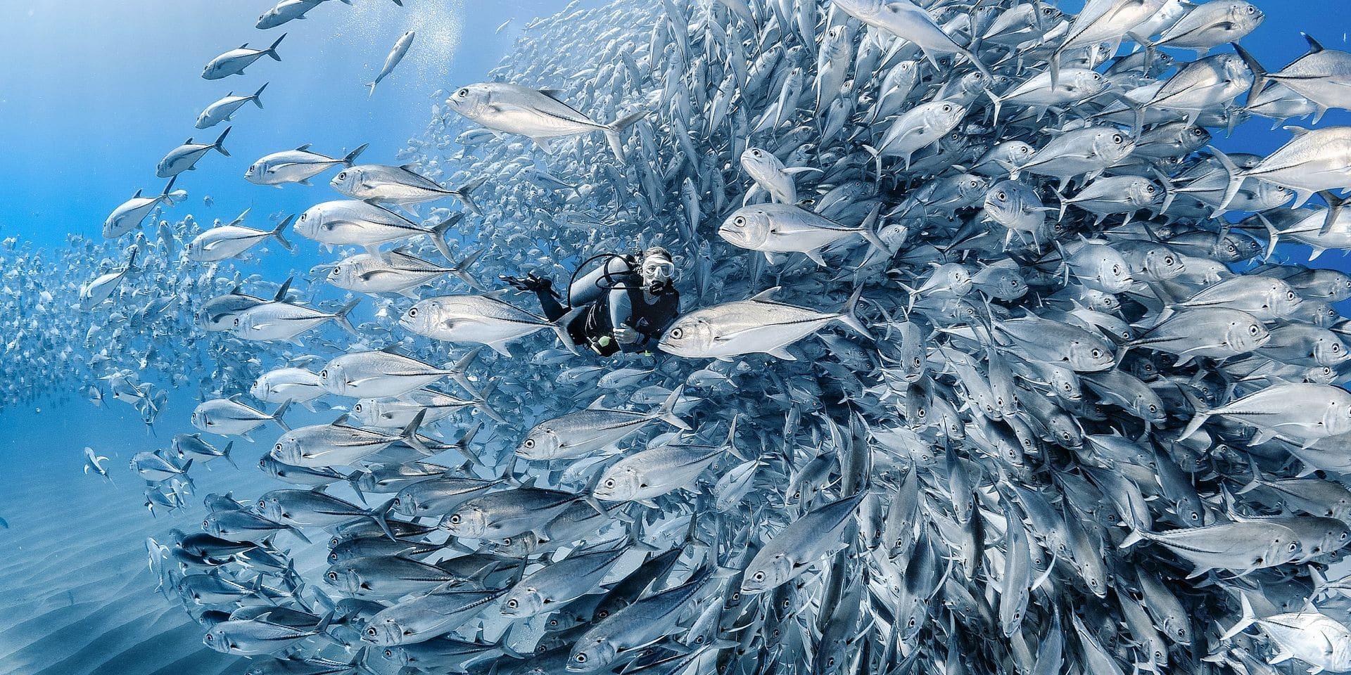 """""""Repeupler l'océan de poissons, ce ne serait pas si ardu"""""""