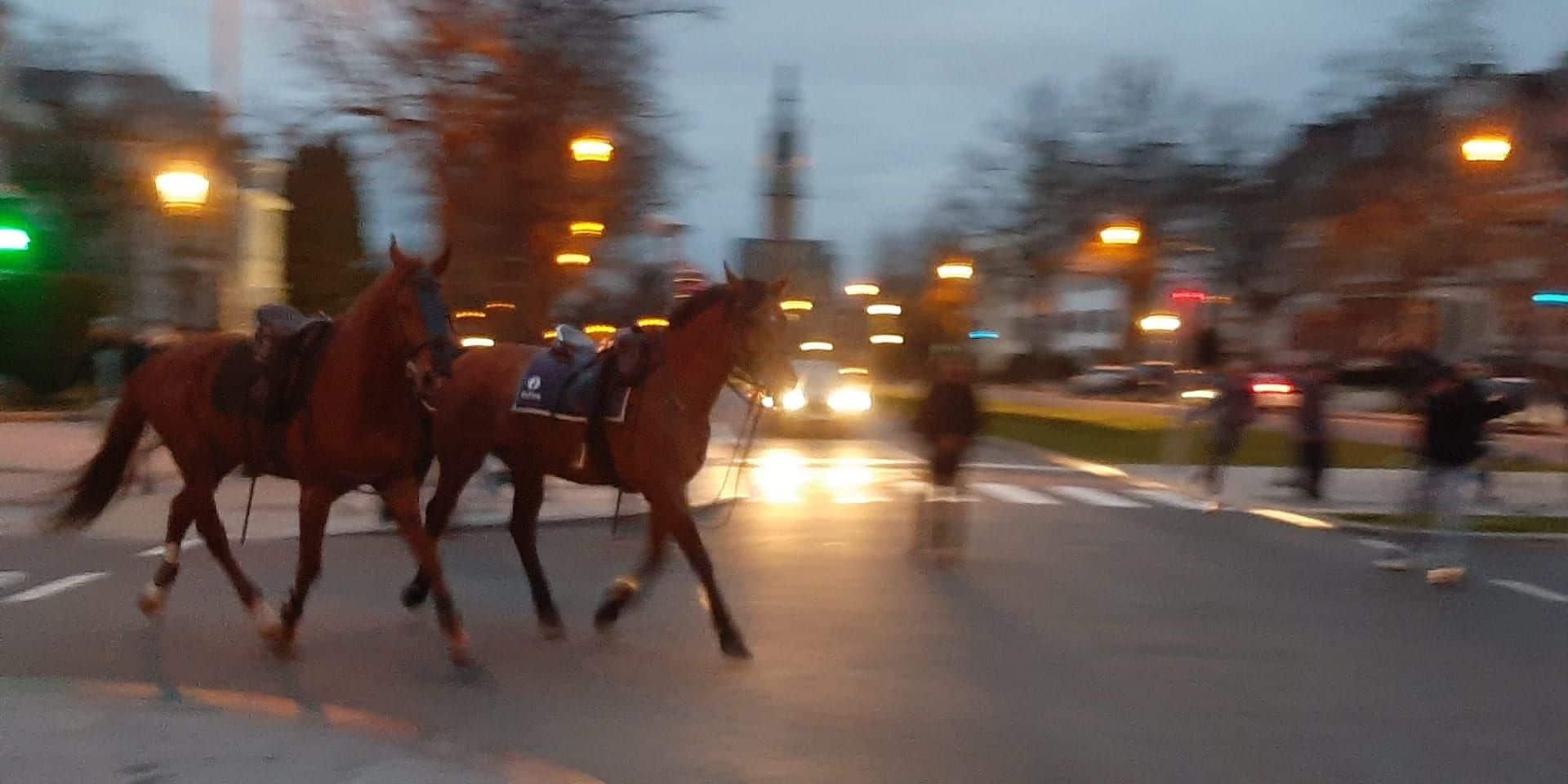 Deux chevaux au milieu de la circulation à Bruxelles : les explications de la porte-parole de la police