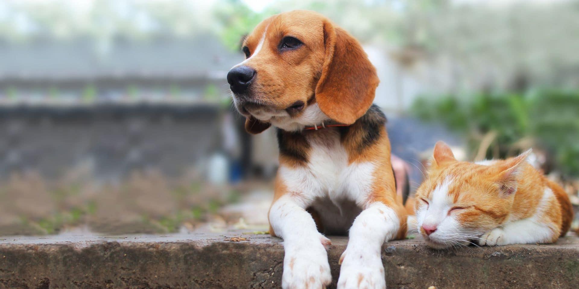Antidouleurs, anti inflammatoires, médecine vétérinaire interne, oncologie, etc. L'économie des animaux de compagnie couvre de nombreux domaines.