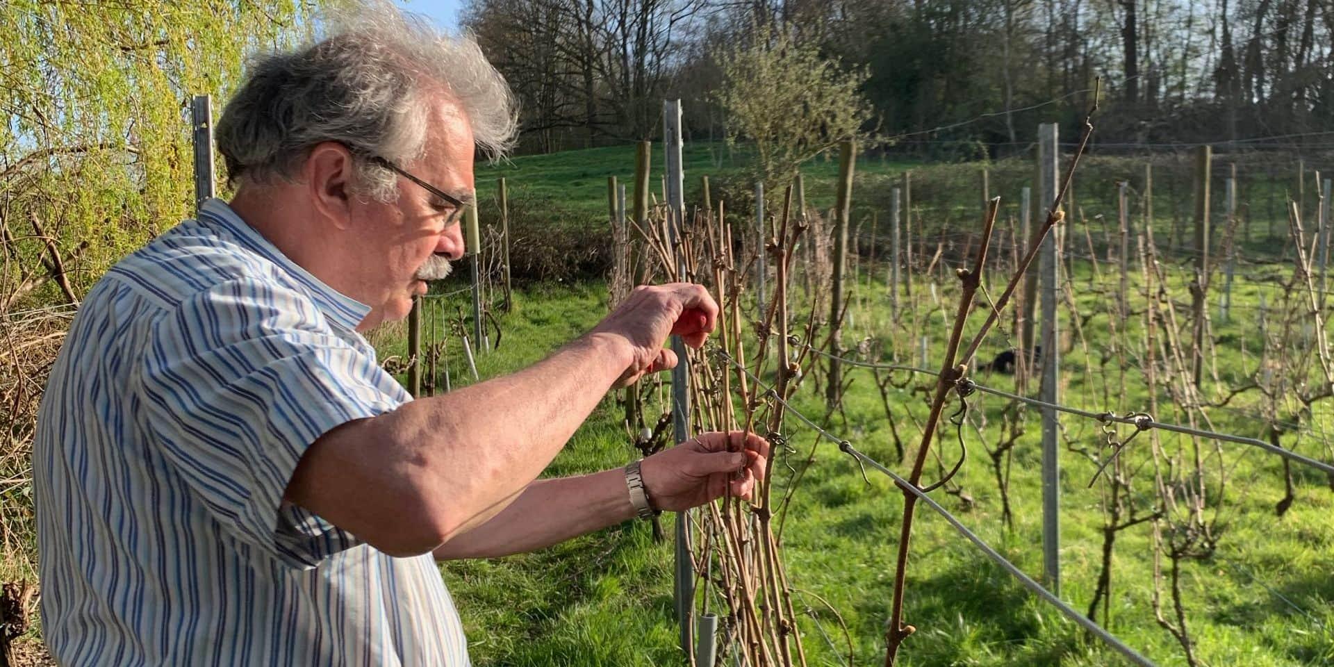 Elle n'est pas réservée qu'aux connaisseurs : la fabuleuse histoire de la vigne