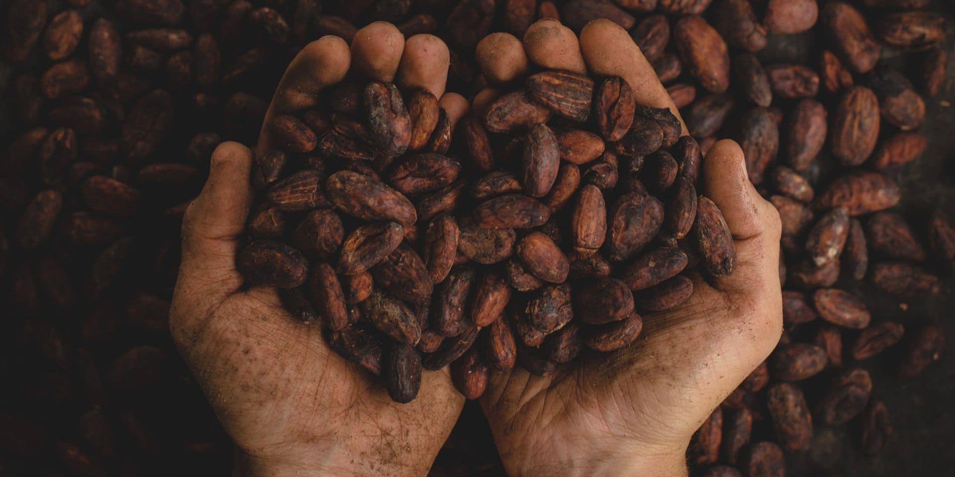 Pourquoi le chocolat est-il si important dans nos vies ?