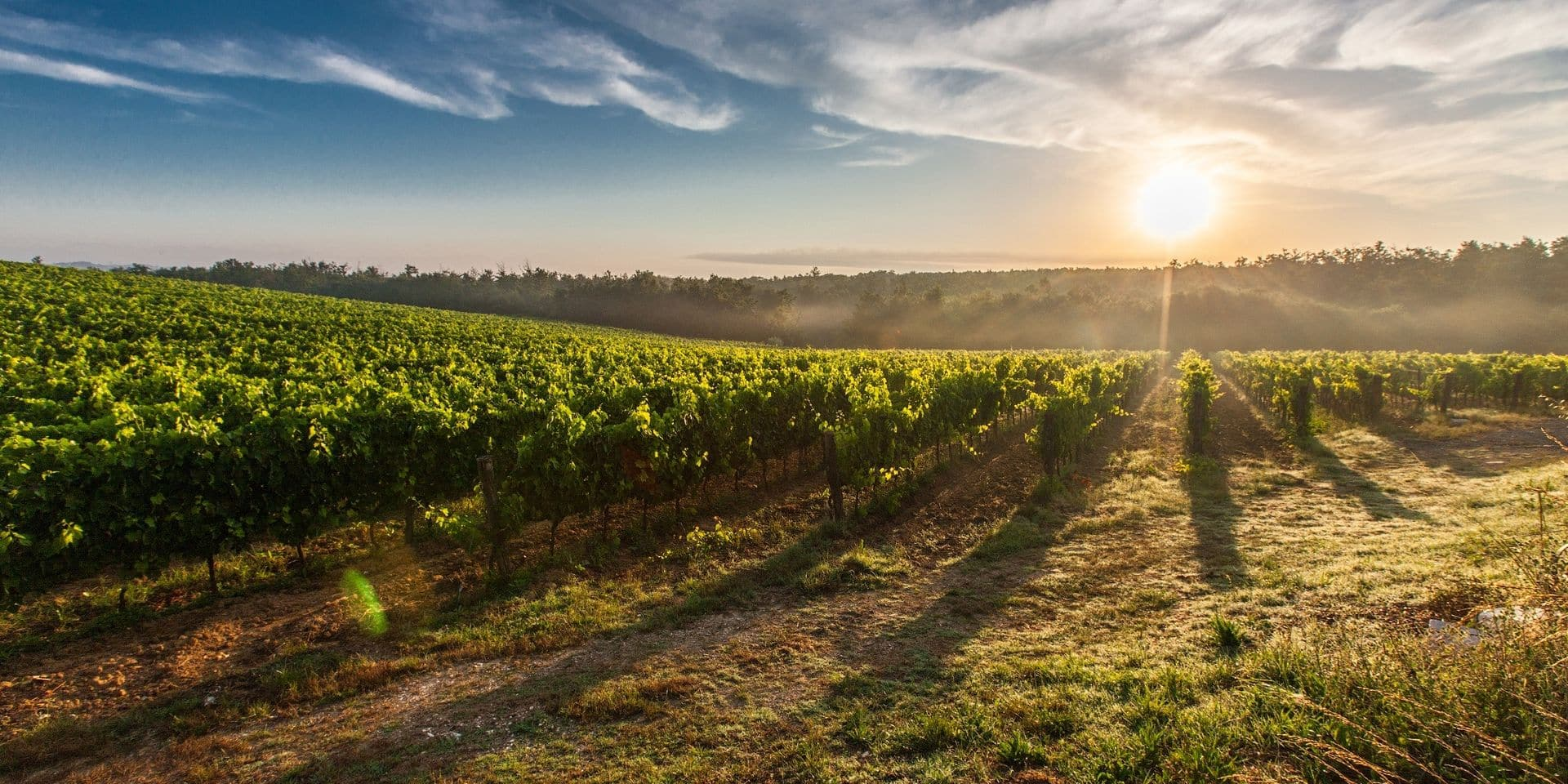 Œnotourisme à petit prix : bienvenue dans l'Aude