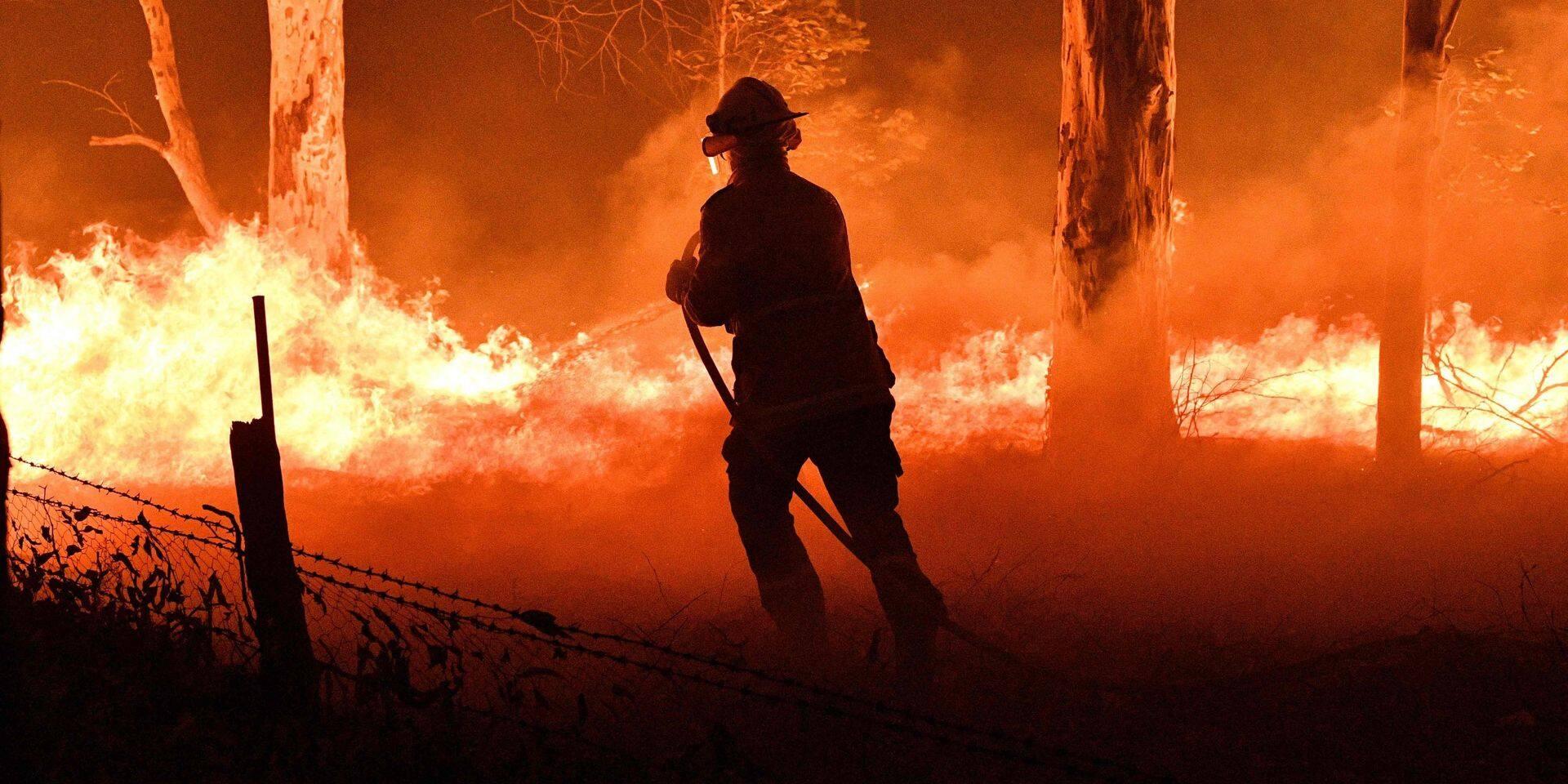 """WWF Belgique lance une collecte de fonds pour """"la catastrophe écologique"""" en Australie"""