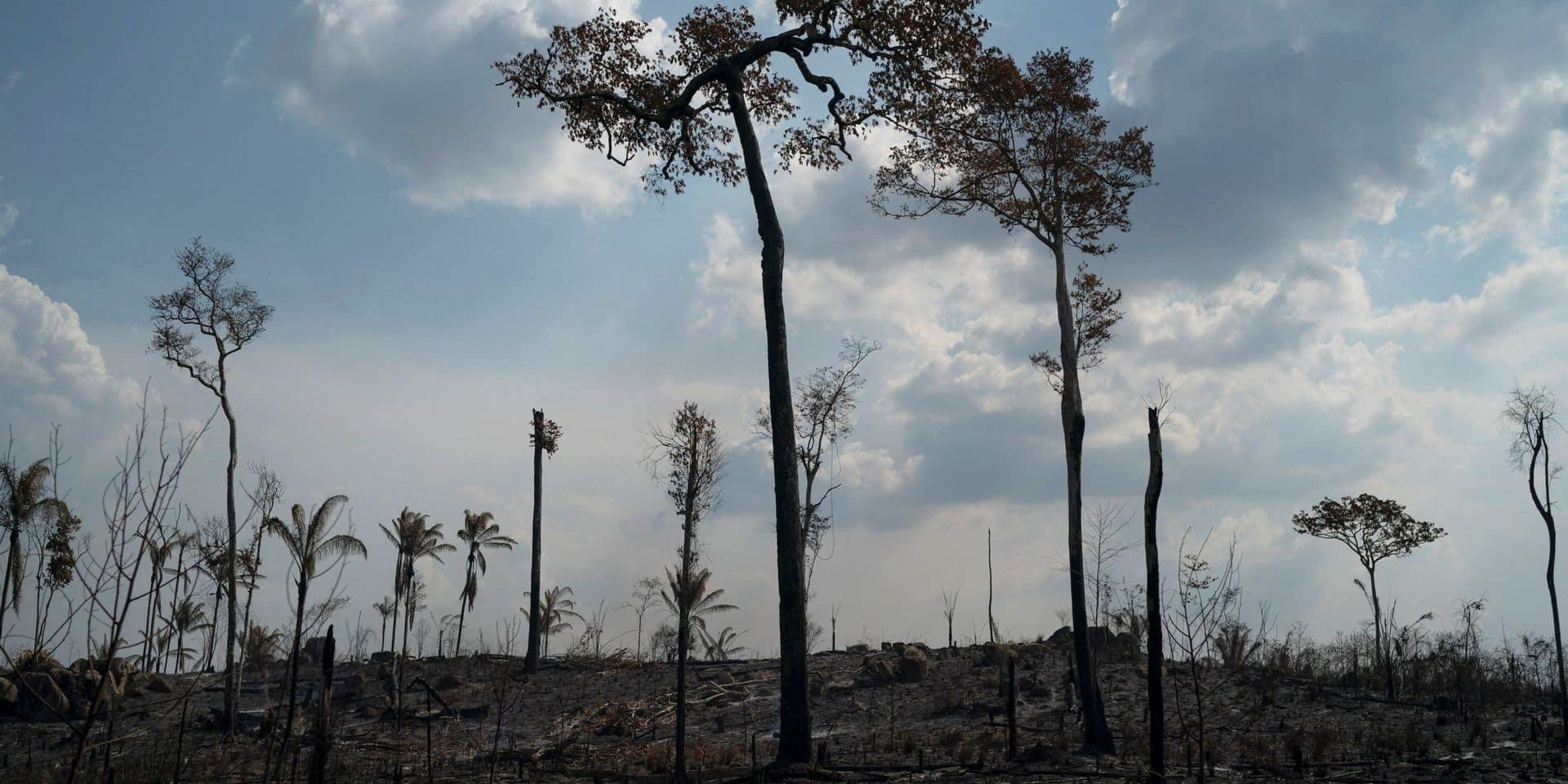 Et si on interdisait les produits issus de la déforestation en Amazonie? C'est ce que proposent des ONG et députés français