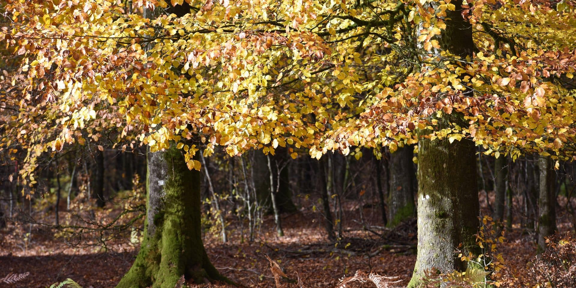 automne climat