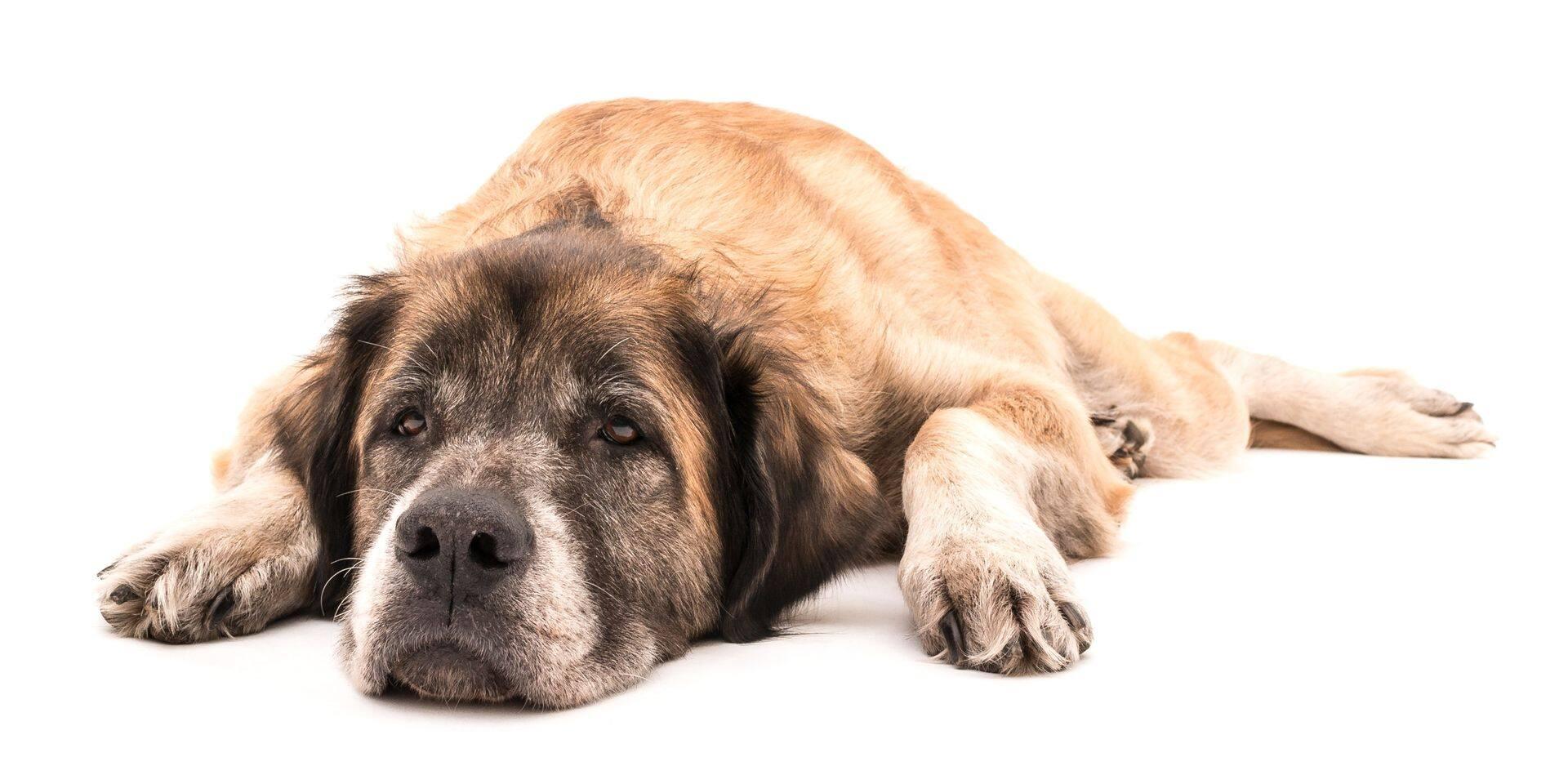 Votre chien pourrait être plus vieux que vous le pensiez