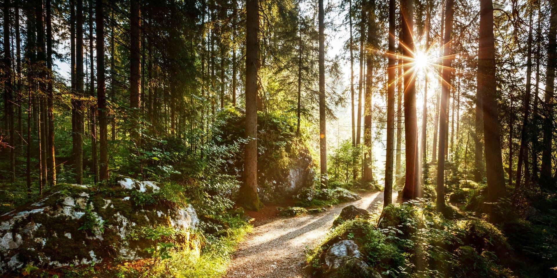 """Pourquoi les forêts wallonnes sont plus chères ? """"Il y a quatre grandes raisons"""""""
