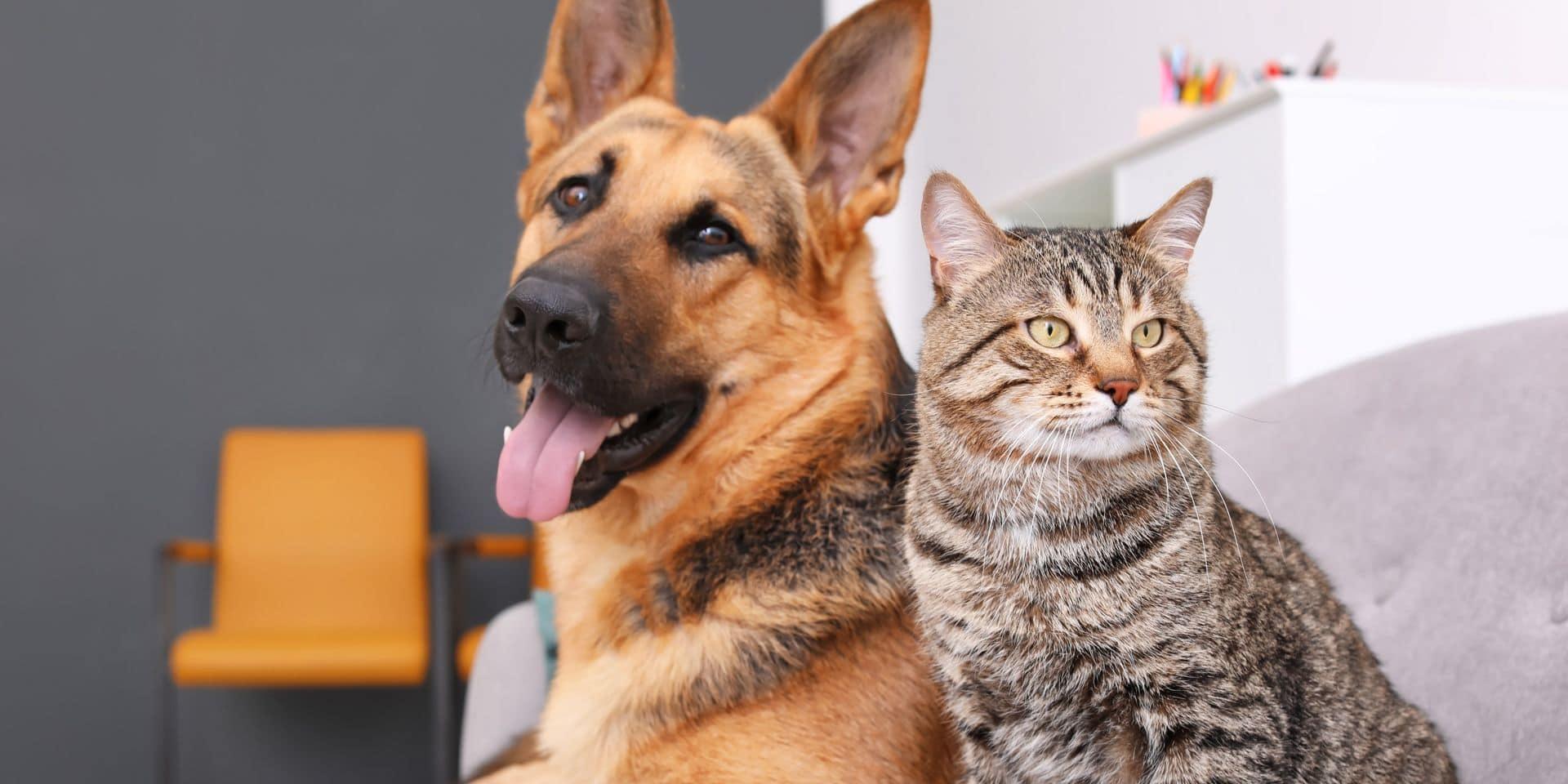 Coronavirus: les chiens et les chats peuvent aussi être testés dans certains pays