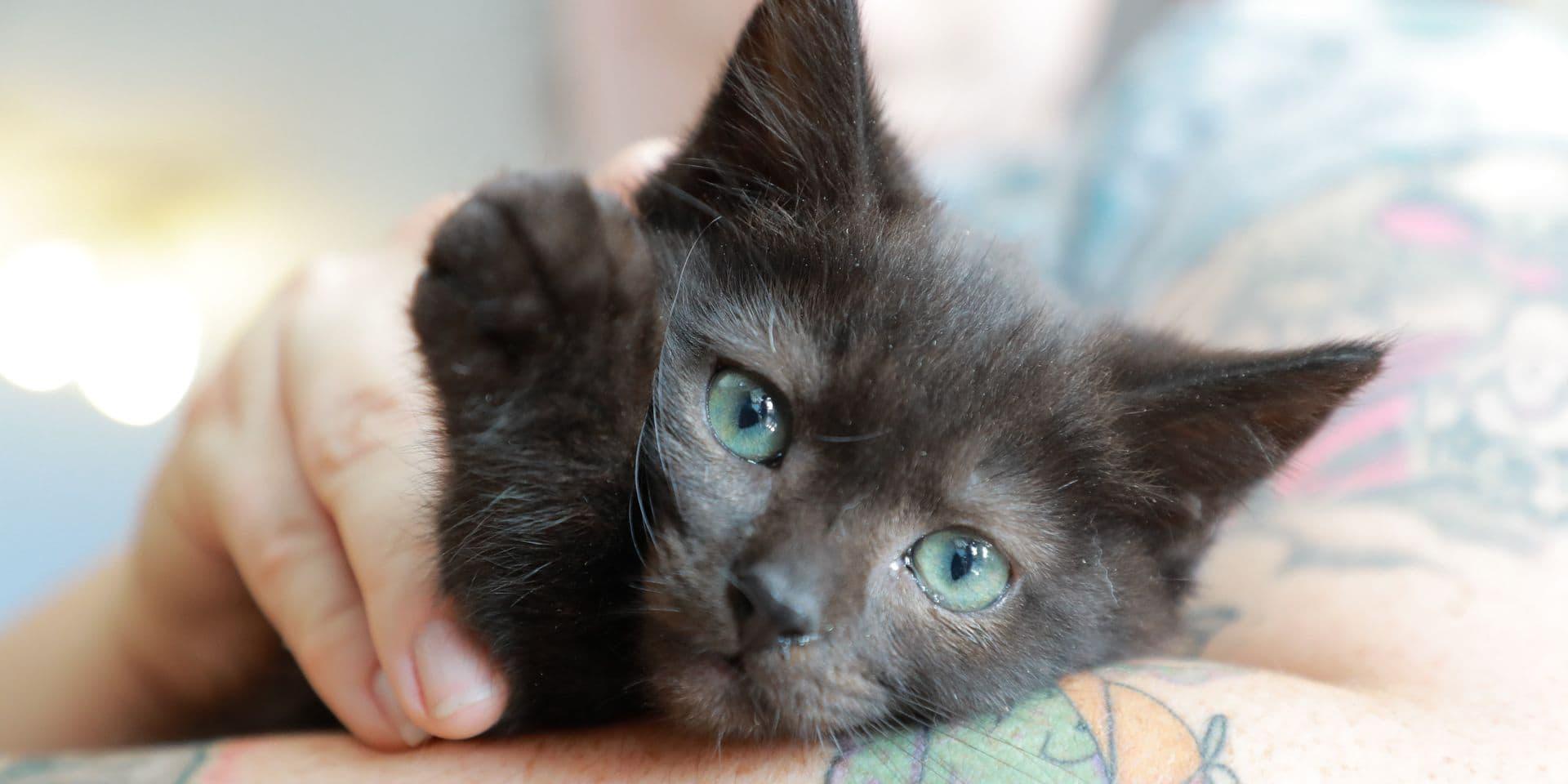 """Les amateurs de chats invités à prendre part à la lutte contre les abus d'enfants: """"Pour chaque photo de chat, 78 images d'abus sexuels sur des enfants sont partagées"""""""
