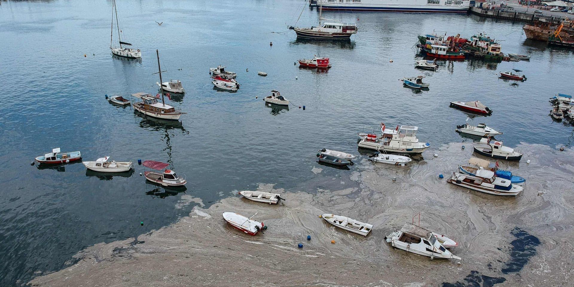 """En Turquie, les côtes sont envahies par de la """"morve de mer"""""""