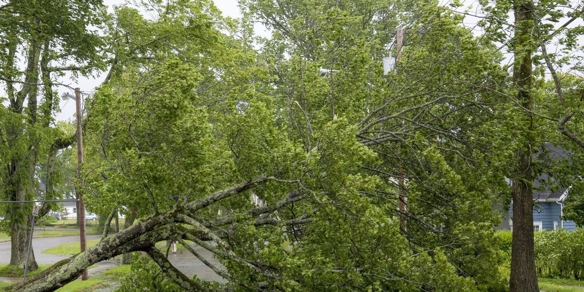 Météo: des rafales de vent jusqu'à 90 km/h mardi