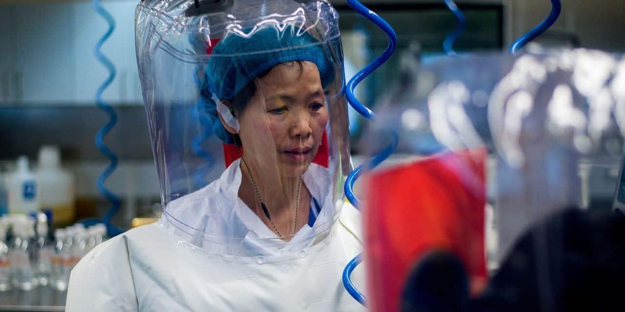 """La virologue chinoise qui a identifié le nouveau coronavirus l'affirme: """"Le Covid-19 n'est que la partie émergée de l'iceberg"""""""