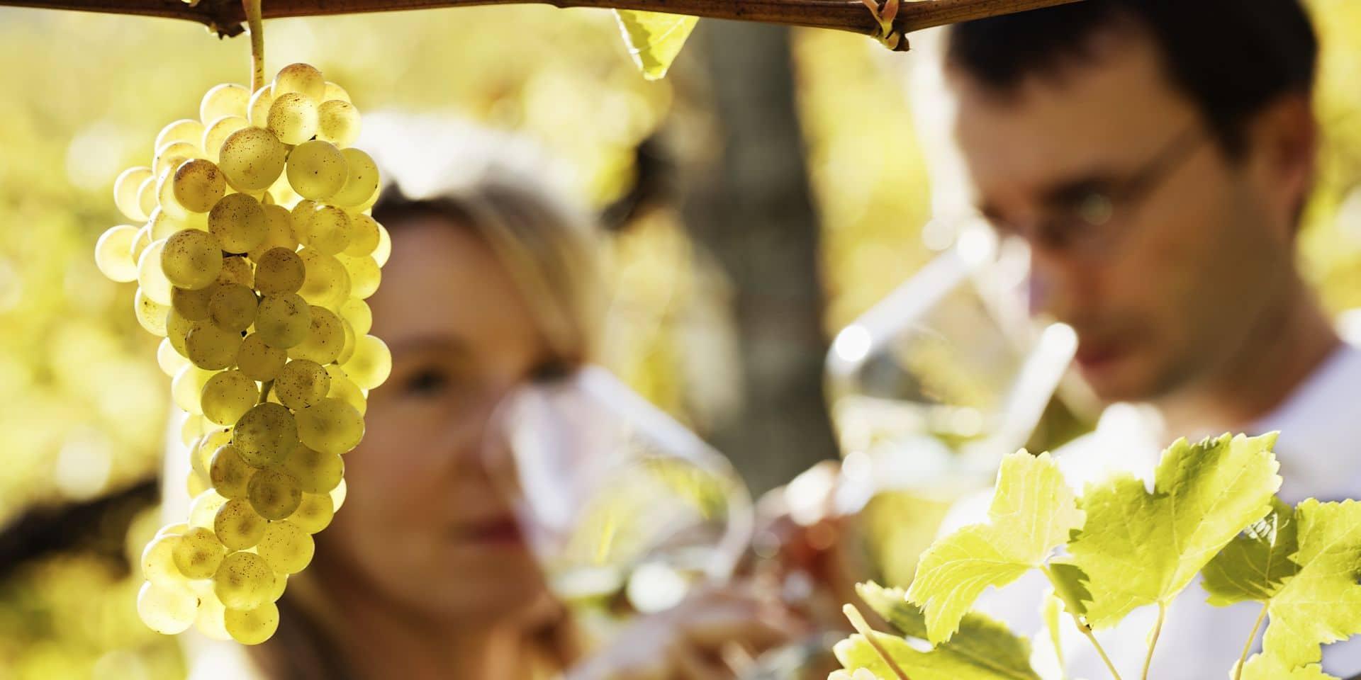 Pour décrire le vin, on fait parler les sens