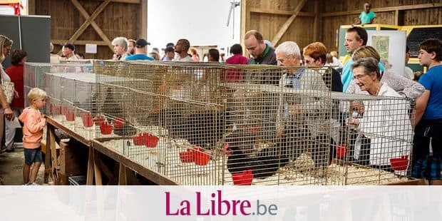 BATTICE. FOIRE AGRICOLE DE BATTICE 2018. Photo Michel Tonneau