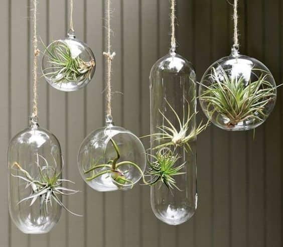 Dans des boules transparentes